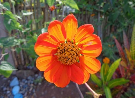 fiore piccolo colore arancio