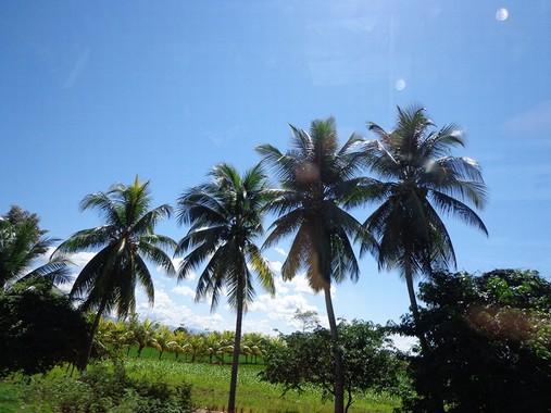 Palme Perù