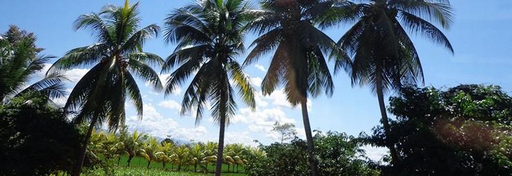 ambiente palme cielo bello